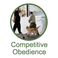 Competitive Obedience Classes