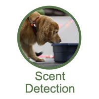 Scent Detection Training